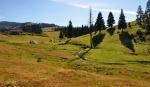Na planině Padisu...