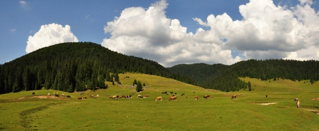 Putující krávy a tmavý mrak, z něhož zahřmí, nás zvedne znovu na nohy.