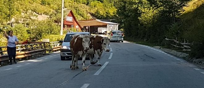 Na cestách mají přednost zvířata...