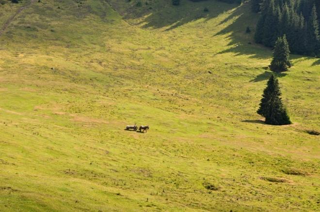 Koňský povoz podjíždí zaoblaný kopec, odkud máme skvělý rozhled...
