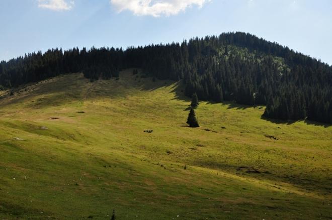 Pod hřebenem Vf. Gudafu (1 477 m n. m.).