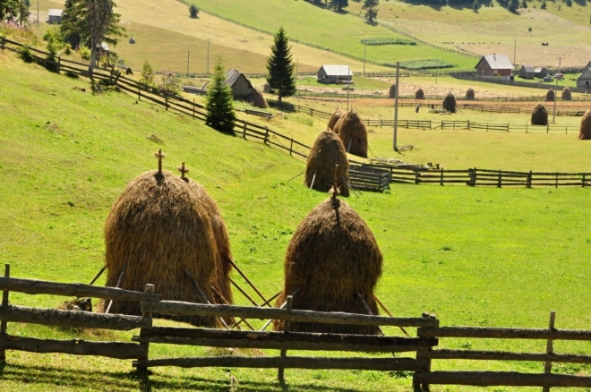 Křízky jsou i na snopech ze suché trávy.