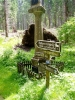 Cesta vede stále lesem přes Stodůlecký vrch stále po nové značené hřebenové příhraniční stezce.