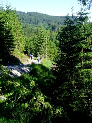 My ale zahýbáme k lesu a klesáme do údolí říčky Lužnice, kterým chceme dojít až k rybníku.