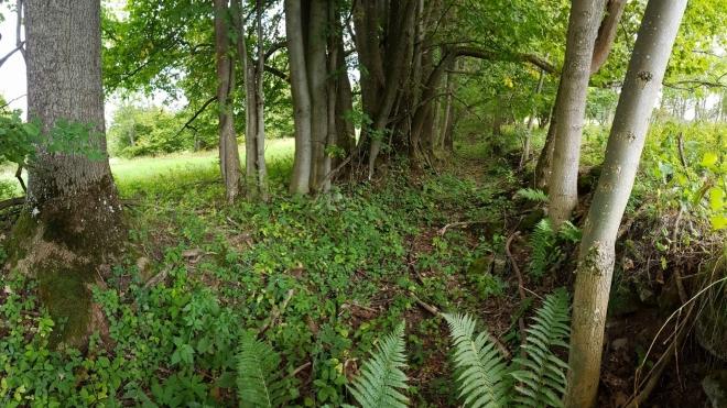 Cesty se mění v neprůchodnou džungli.