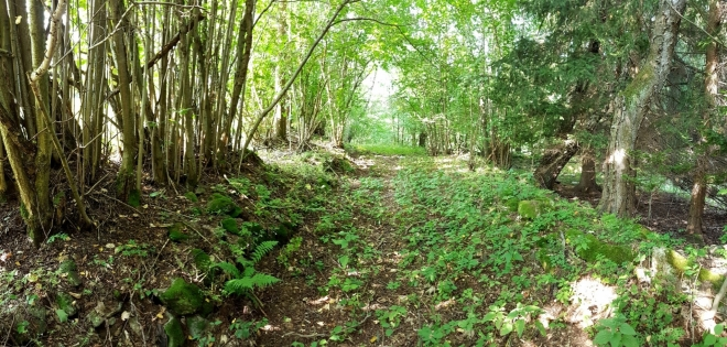 Cesty vegetace postupně mění v zelené tunely.