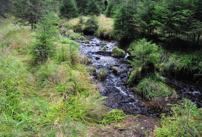 Potok Bučina.