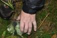 Podivná lebka malého zvířete, zřejmě šelmy.