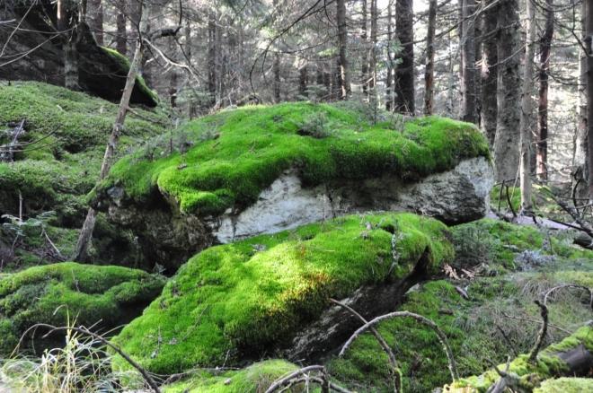 Uvnitř lesa je mech na podzim vždy nejzelenější...
