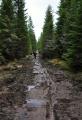 Takto buldozerem upravená cesta vede směrem k Čertovu vrchu.