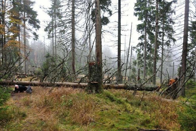 podlez... Ztížený přístup v kůrovcem zničeném lese u l. zóny.