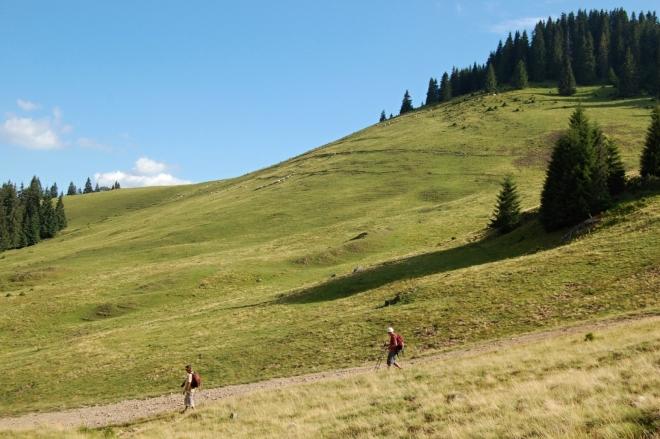Stádečko ovcí pod vrcholem Vf. Vărăşoaia (1 461 m n. m.).