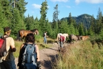 Před Padisem se předháníme s tažnými koni.