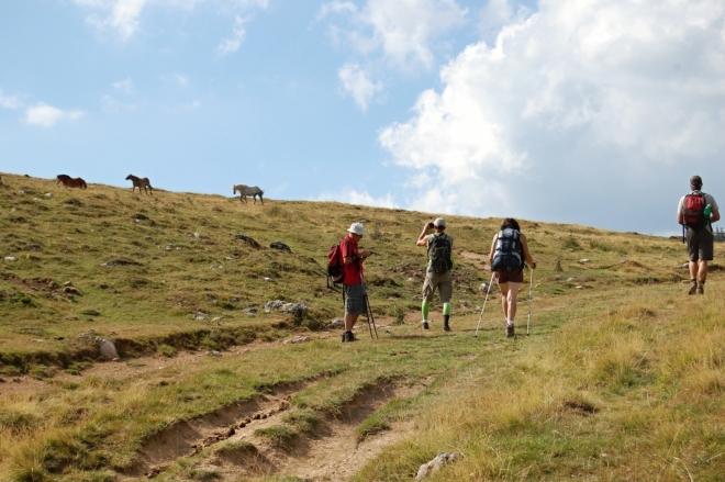 Băliceana je název několika salaší v půvabném údolíčku pod Vf. Gudapu.