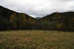 Pastvina u Wunderbachu.