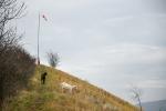 Kozy pomáhají spásat prudké stráně...