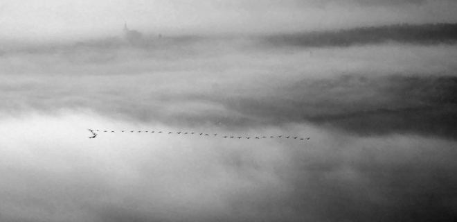 Cesty tažných ptáků.