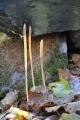 Paluška (kyj) rourkovitá dorůstá až 30 cm výšky. Chladné listopadové počasí této houbě svědčí.