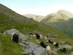Švýcarské dvoubarevné kozy