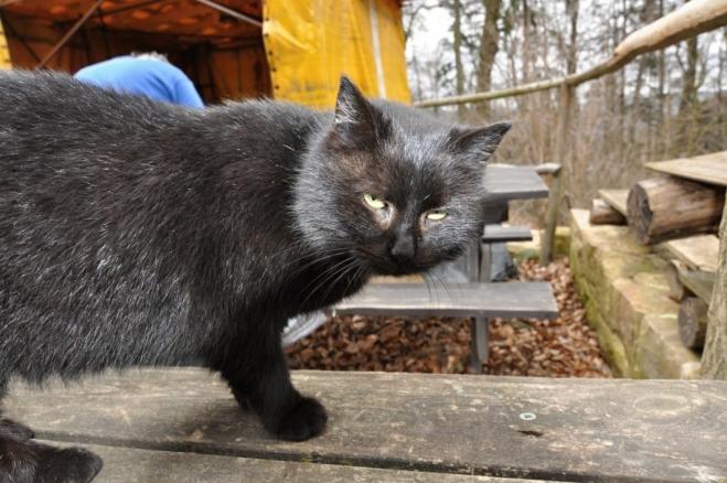 Hladová kočka cimburská.