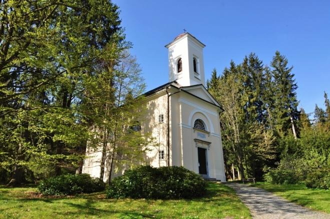 Kostelík svěže bílý.