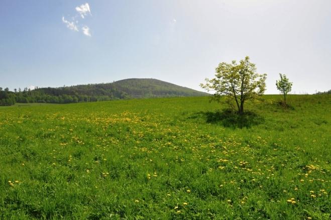 Biskupská kupa od Zlatých Hor.