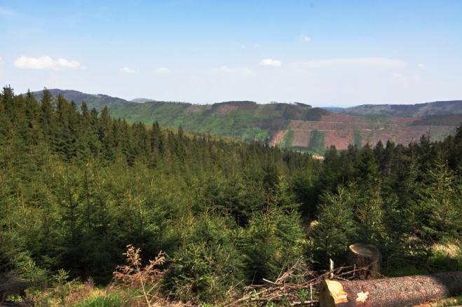 Lesy trpí kůrovcovou kalamitou a velkým suchem posledních let.