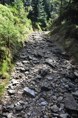 Stezkou vzhůru na Příčný vrch zřejmě v minulosti stoupalo nemálo horníků. Kamenitý úsek tomu napovídá.