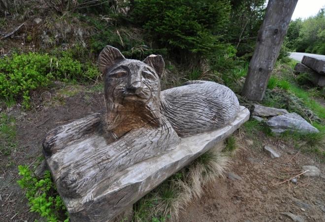 Rys hlídá Medvědí horu.