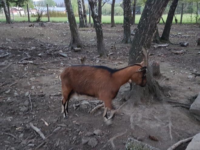 K penzionu patří i výběhy. Eko farma chová koně, ovce, kozy, slepice, divoká a domácí prasata a pštrosa alternativním způsobem ve volné přírodě. Velkou část potravin do kuchyně si produkuje sama. Zároveň se zabývá výrobou vlastních sýru a sušeného hovězího masa.