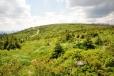 Vrchol Nad Rakouskou loukou je po Plechým nejvyšším vrcholem české strany Šumavy.