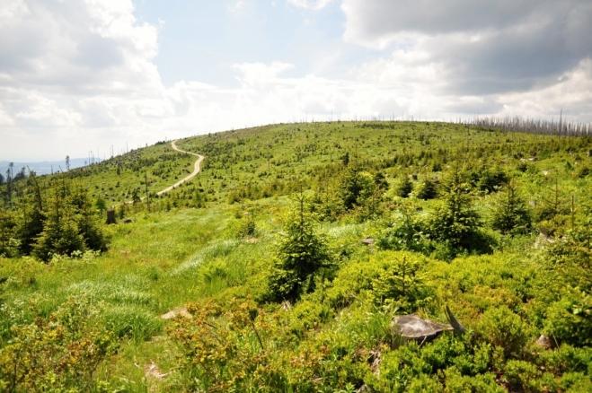 Vrchol Nad Rakouskou loukou je druhým nejvyšším vrcholem české strany Šumavy.