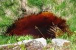 Horko svádí k odpočinku u vody, ale barva rašeliny nás odradila.