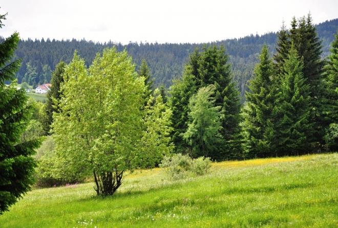 Pastviny Horní Silnice.