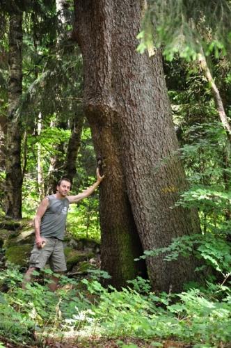 Mohutných stromů zato spatříme mnoho.
