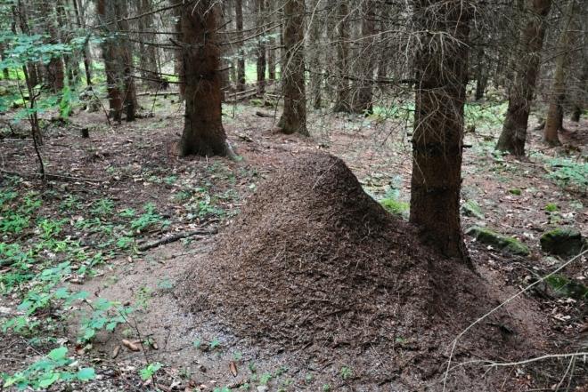 Velké mraveniště.