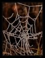 Tak aby zmrzla jinovatka na pavučinách, to se asi běžně nestává. Většinou, před prvními mrazy, je už dávno po pavučinkách. Snažil jsem se toho vzácného dne využít co nejvíce a opravdu se mi to docela podařilo nejen touto fotkou.
