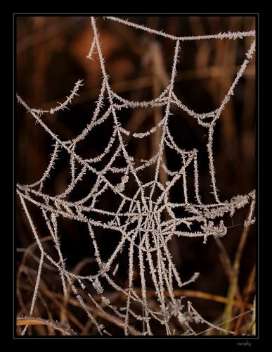 Aby zmrzla jinovatka na pavučinách, to se asi běžně nestává. Většinou, před prvními mrazy, je už dávno po nich. Snažil jsem se toho vzácného dne využít co nejvíce a opravdu se mi to docela podařilo nejen touto fotkou.