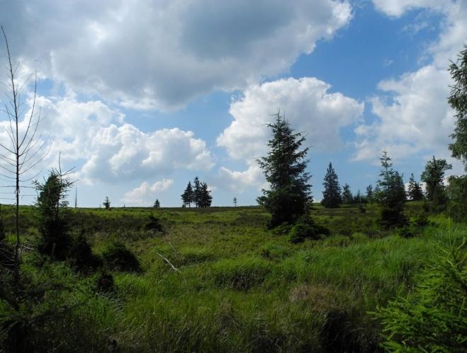 Tok je ojedinělým vrcholem. Jeho ploché temeno je bezlesé, podobné severské tundře.
