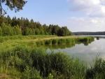 Horní Padrťský rybník - zátoka sviní.