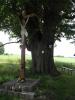 Památný strom.