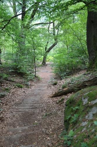 Dnes je zamračeno, pro fotky v lese je to jen dobře.