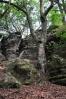Nejen skály, ale i stromy vytváří nádhernou kulisu, kterou procházíme.