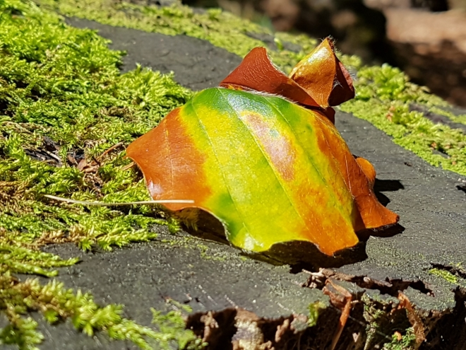 Náznak podzimu.