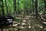 Les je převážně bukový a poskytne nám toužený stín.