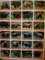 Fotoalbum, které nás zaujme. V lesích Poľany možná bude víc medvědů než turistů.