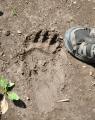 Medvídkova stopa.