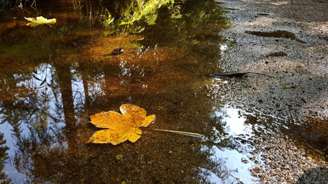 Vchynicko-Tetovský kanál je téměř bez vody.