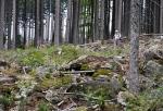Kameny ztěžují výstupy i sestupy na mnoha šumavských vrcholech.