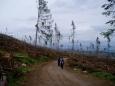 A dole zkáze neodolalo téměř nic. Rok 2005 byl kritický pro všechny lesy ve vyšších polohách. Zbylo jen málo ...